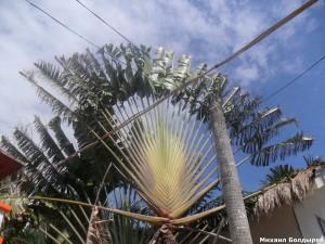 SAM 0819 300x225 Филиппины, Боракай, с 16 го апреля по 2 ое мая 2012 го года.