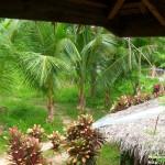 SAM 2783 150x150 Ресторанчик BAHAY KUBO на острове Самал (Филиппины)