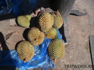 Как чистят дурианы в Лаосе (г. Вьетьян)