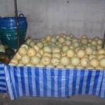 thai melon 150x150 Фрукты Таиланда