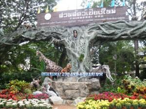 Chiangmai Zoo-1