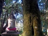 thumbs burial of king lanna 4 Национальный парк Дойинтханон или путешествие к самой высокой точке Таиланда