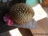 thumbs fruits in laos 21 Фрукты Лаоса (Вьетьян)