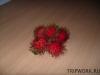 thumbs fruits in thailand 190 Фрукты Таиланда