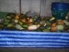 thumbs fruits in thailand 94 Фрукты Таиланда