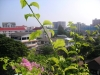 thumbs go to chiangmai 26 Едем в северную столицу Таиланда –  Чиангмай