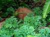 thumbs royal garden siribhum 12 Национальный парк Дойинтханон или путешествие к самой высокой точке Таиланда
