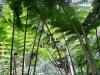thumbs royal garden siribhum 13 Национальный парк Дойинтханон или путешествие к самой высокой точке Таиланда