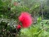 thumbs royal garden siribhum 17 Национальный парк Дойинтханон или путешествие к самой высокой точке Таиланда