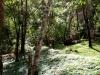 thumbs royal garden siribhum 24 Национальный парк Дойинтханон или путешествие к самой высокой точке Таиланда