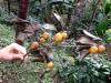 thumbs royal garden siribhum 25 Национальный парк Дойинтханон или путешествие к самой высокой точке Таиланда