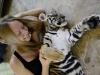thumbs tiger kingdom 10 Королевство тигров (Tiger Kingdom)