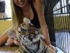 thumbs tiger kingdom 20 Королевство тигров (Tiger Kingdom)