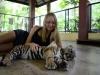 thumbs tiger kingdom 7 Королевство тигров (Tiger Kingdom)