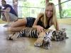 thumbs tiger kingdom 8 Королевство тигров (Tiger Kingdom)