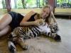 thumbs tiger kingdom 9 Королевство тигров (Tiger Kingdom)