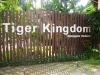 thumbs tiger kingdom 2 Королевство тигров (Tiger Kingdom)