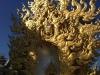 thumbs wat rong khun 24 Белый храм в Чианг Рае (Wat Rong Khun) или как мы попали в сказку
